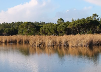 Sesimbra History & Birdwatching
