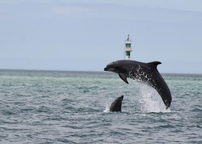 Dolphin Watching from Lisbon